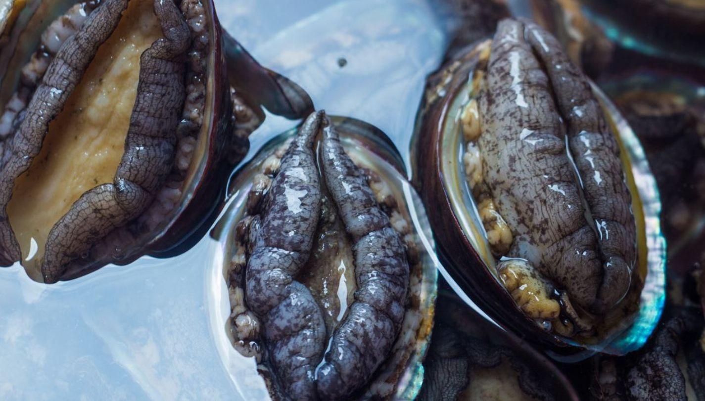 很污的食物丨黑鲍鱼、粉木耳、紫葡萄、软香蕉