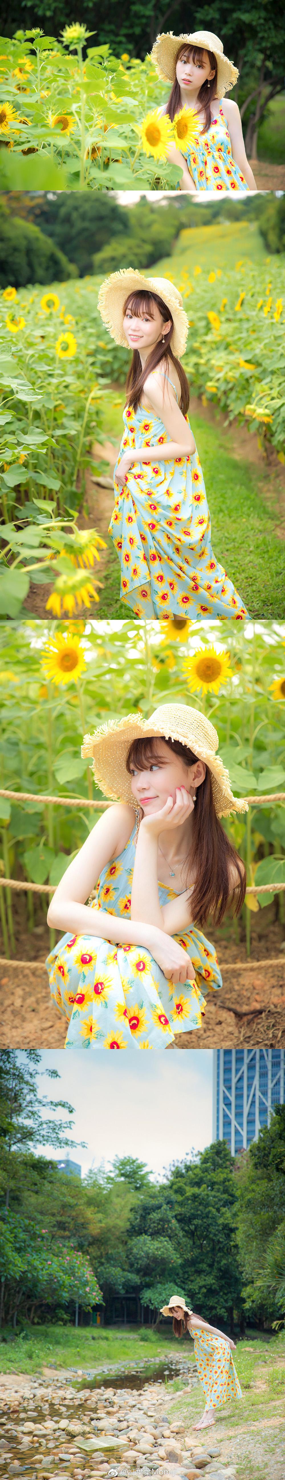 向日葵插图6