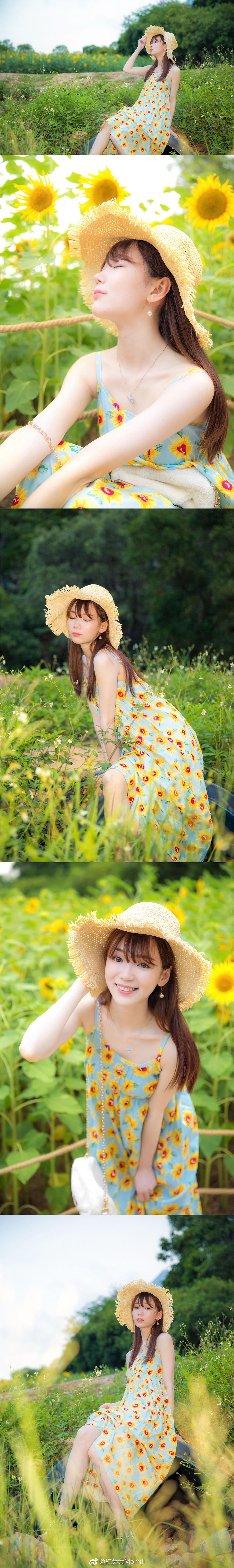向日葵插图7