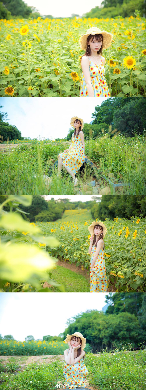 向日葵插图8