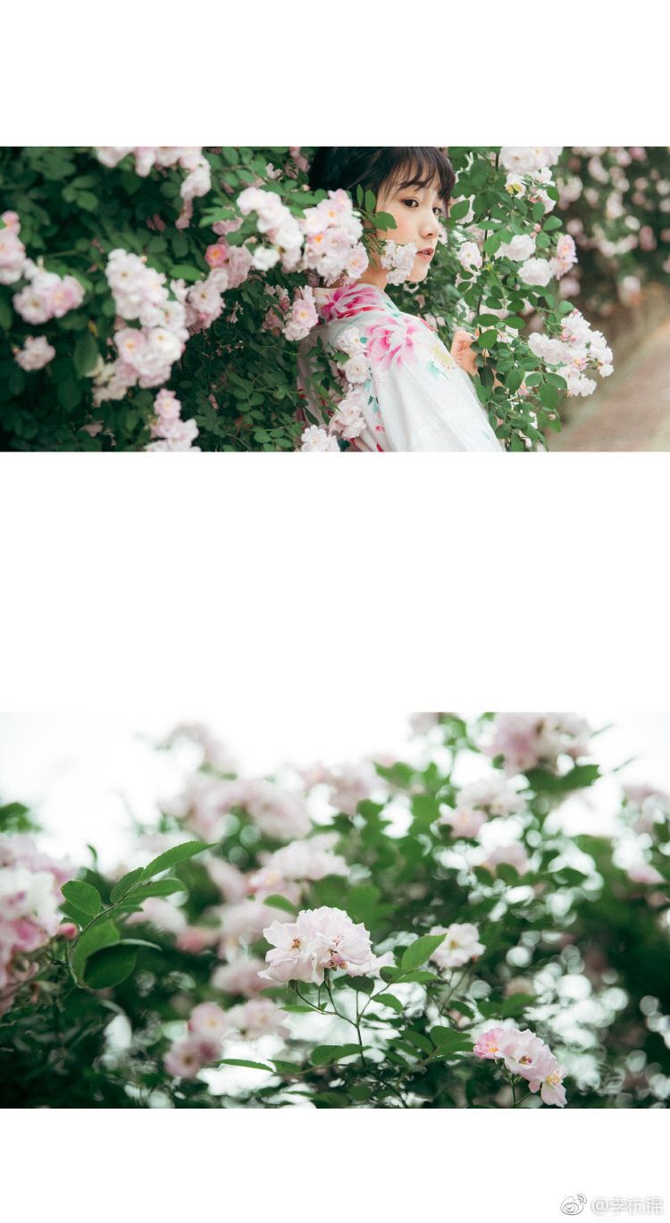 蔷薇与你插图3
