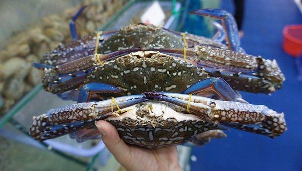 crab-blue-5249765__340