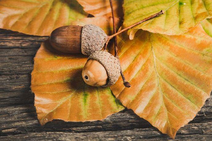 acorns-5646979__480