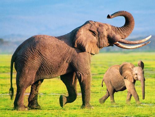 奇奇怪怪又可可爱爱的动物们小知识合集