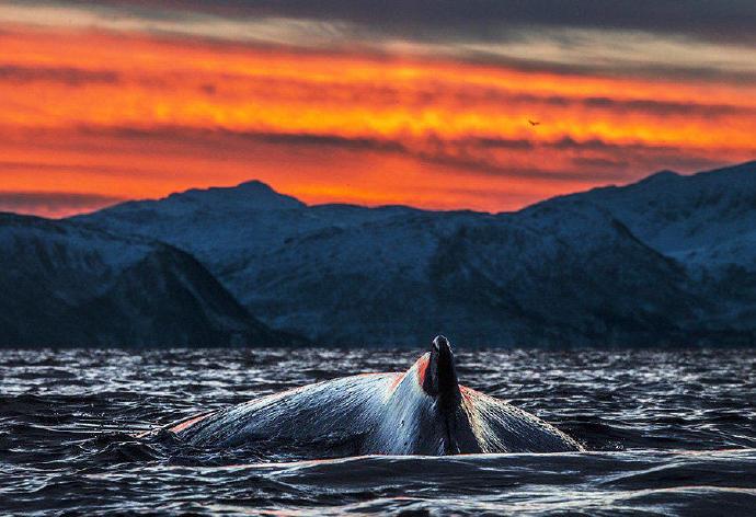 鲸   Audun Rikardsen 照相机实用技术