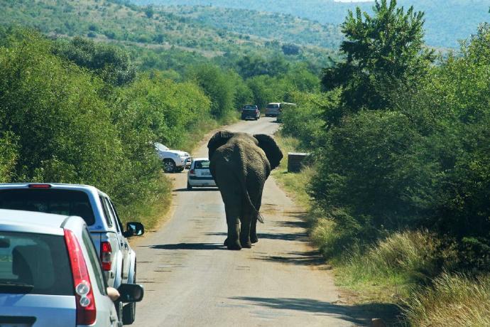 大象逃回系统-前方高能
