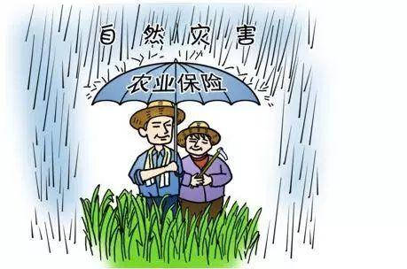 万亩良田遭水淹,最后一道防线是农业保险