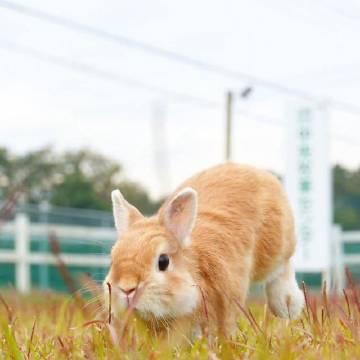 奔跑吧小兔兔。ins:peterpom211...