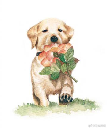 让我们#与导盲犬同行#,它们的微笑很治愈