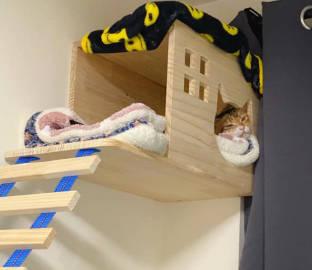 萌宠图片自从装了这个猫窝,除了吃饭上厕所...-萌宠