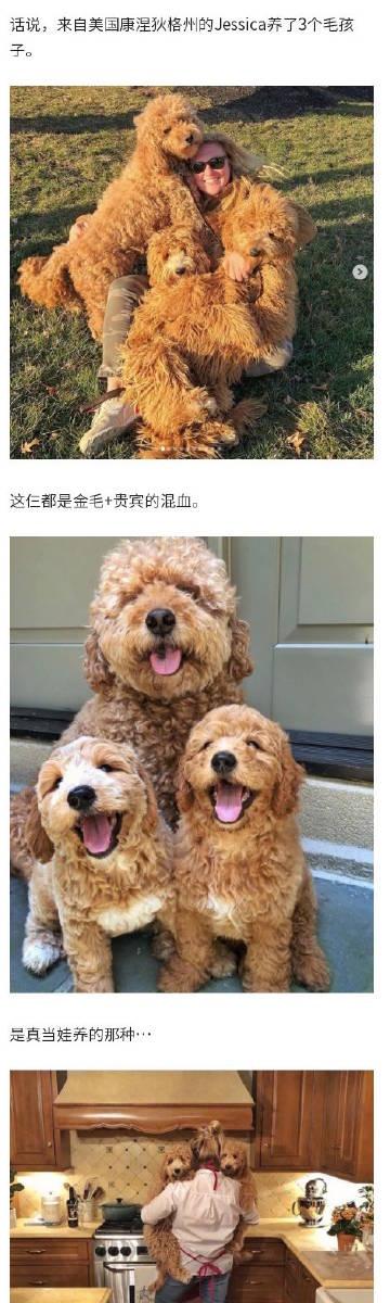 """萌宠图片一出生自带三个""""巨型泰迪""""...-萌宠"""