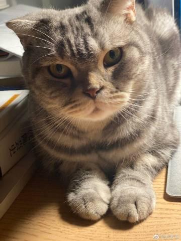 萌宠图片说正经的,我是一只有气势的猫-萌宠