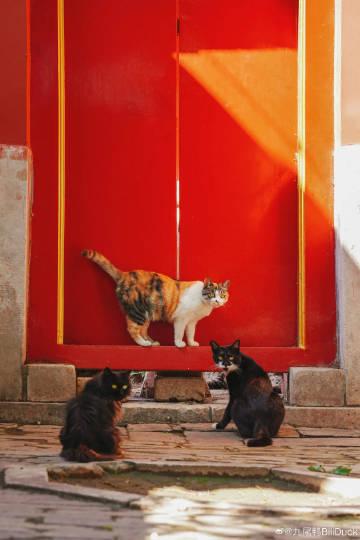 紫禁城的猫@九尾鸭BiliDuck