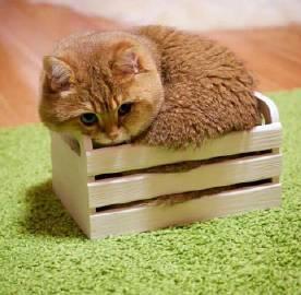 萌宠图片家里有只漂亮大眼猫是种什么体验?-萌宠