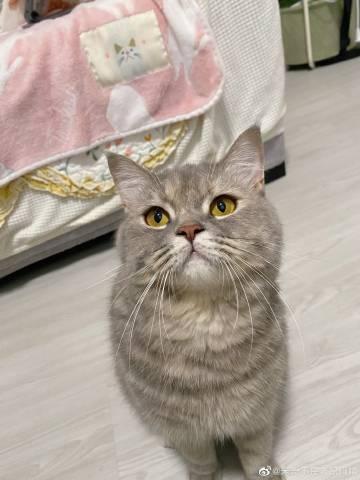 我知道我知道,但小猫咪不能吃雪糕