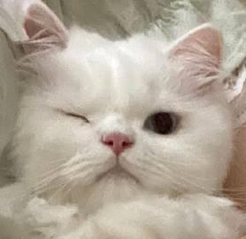 ✧ฅ՞ﻌ՞ฅ 今天也是被猫猫...