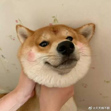 狗子:你看我厉不利害!