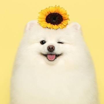 萌宠图片《狗勾的写真集》ฅ՞ﻌ՞ฅ-萌宠