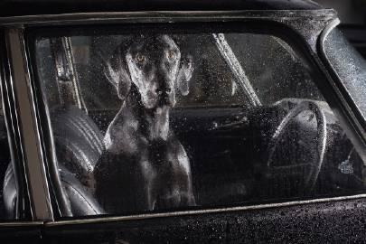萌宠图片#摄影# 狗的沉默 | 英国摄影师:...-萌宠