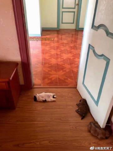 萌宠图片为什么有的小朋友睡姿就是不一样-萌宠