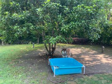 萌宠图片今年把原来的充气游泳池精简了...-萌宠