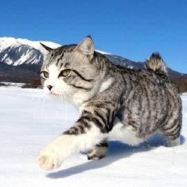 萌宠图片喜欢旅行的猫 ニャン吉-萌宠