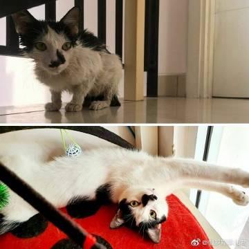 网友分享的流浪猫收养前后对比照