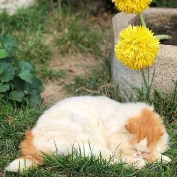 萌宠图片公园里的猫 ins:catlover_garden...-萌宠
