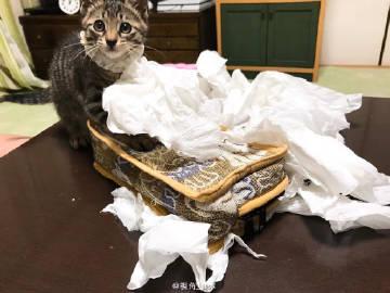 趣闻:养猫人士的日常。