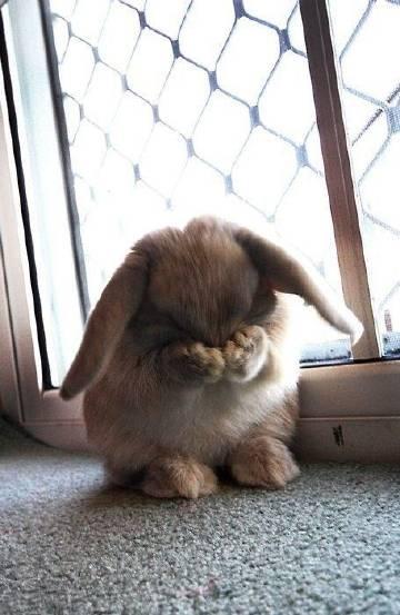 """#早安看见#""""小兔子,快看呀..."""