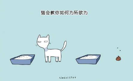 萌宠图片一些猫咪教会我们的事,养猫吧,朋友们-萌宠