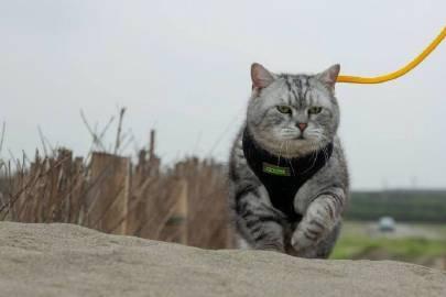 萌宠图片主人第一次带猫到沙滩海边...-萌宠