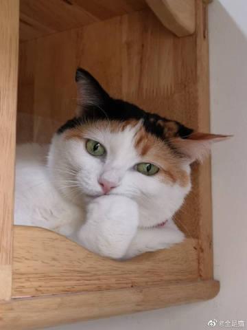 萌宠图片看出来是一只有故事的猫-萌宠
