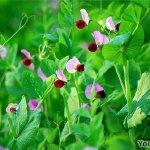 冬季同样美丽的6种常绿爬藤植物:四季常青又耐寒